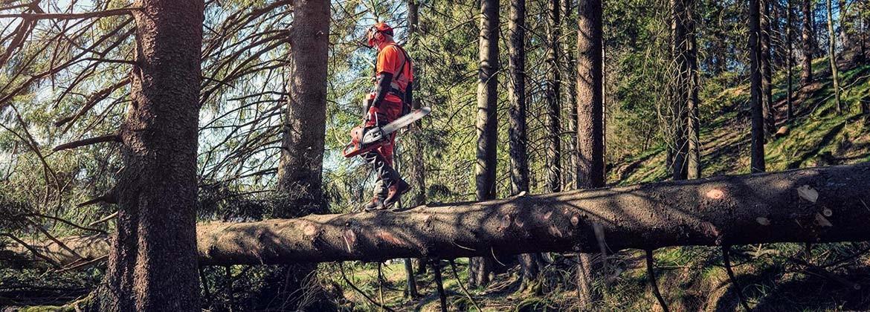 Maquinaria y herramientas para cortar y talar - Comercial Emilio