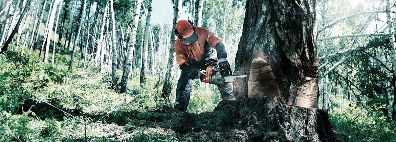 Motosierra – Maquinaria forestal online
