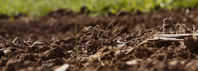 Plantar y cosechar - Comercial Agrícola Emilio
