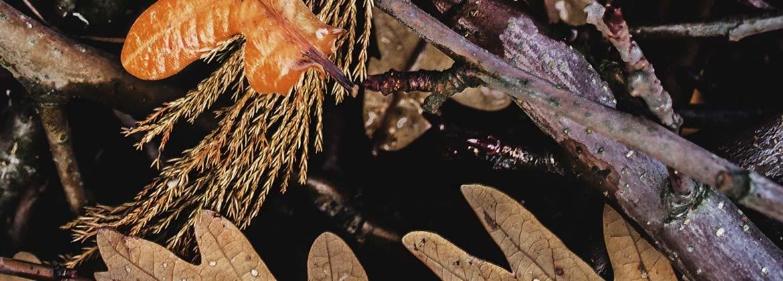 Biotrituradora - Maquinaria de jardinería