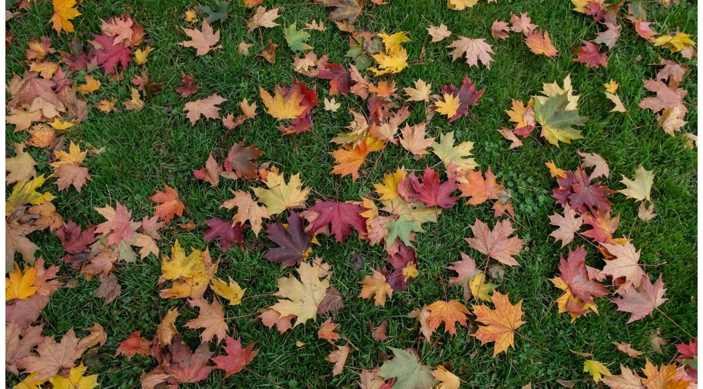 Así se cuida el césped en otoño